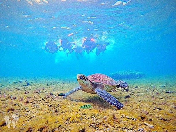Experience Swimming with the Sea Turtles in the Shallow Water!
