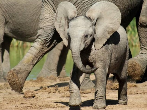 Private Tour in Addo Elephant National Park