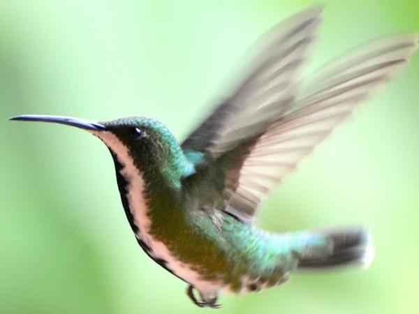 Full Day Birdwatching Tour from Cali