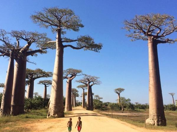 Madagascar highlights Private Tour