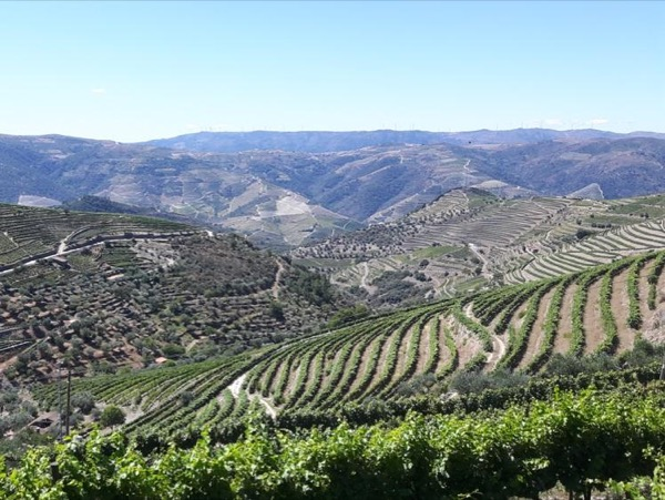 Douro Valley Private Full Day Wine Tour