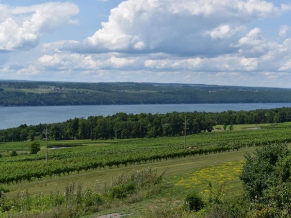 A taste of the Finger Lakes Private tour