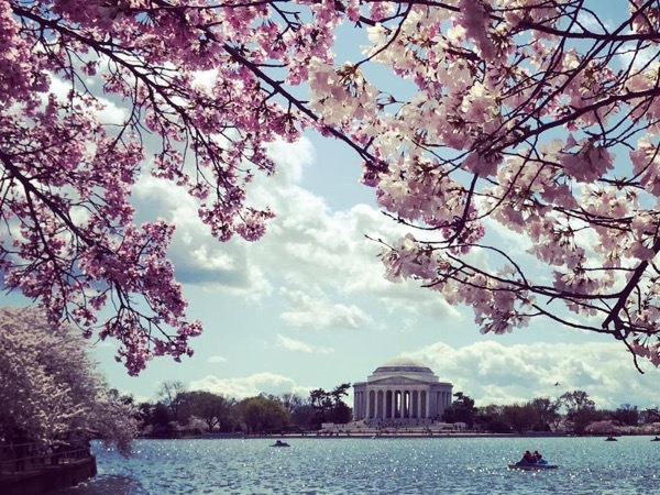 Washington DC Cherry Blossoms Tour