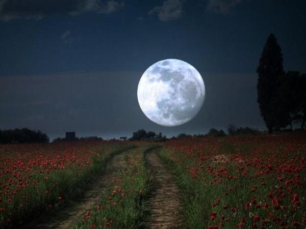 Full Moon Appian Way Night Tour