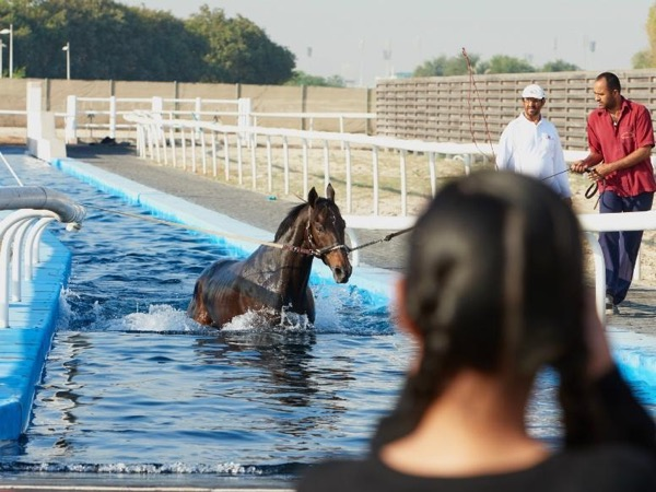 Horse Stable Tour and Dubai City Tour (October 16th 2018 to April 10th 2019) Every Tuesday and Wednesday