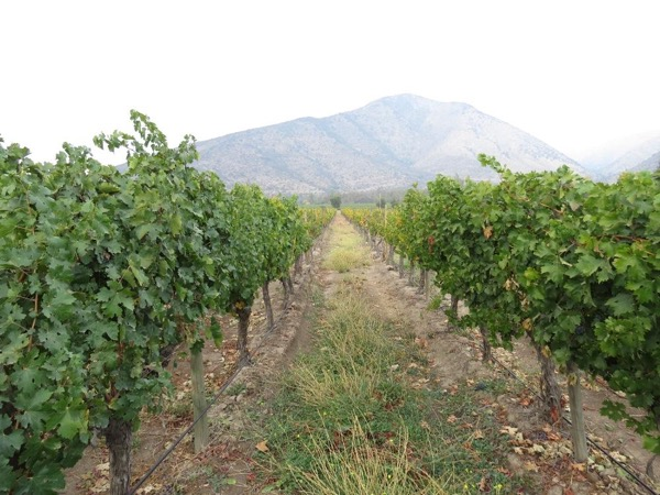Maipo valley wine tour