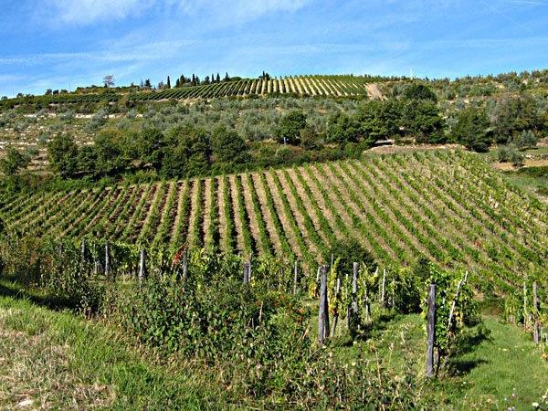 Private Excursion to Chianti region from Florence
