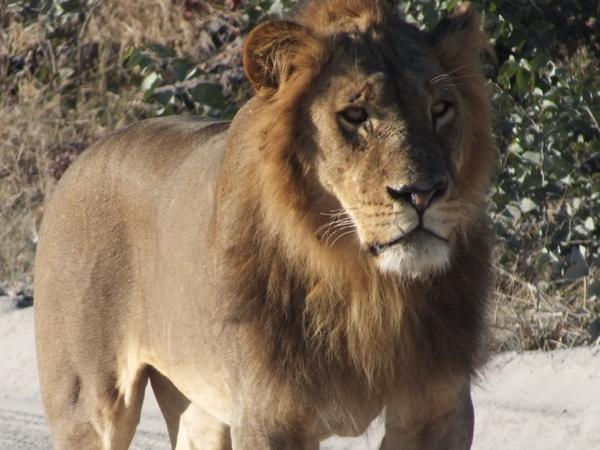 Big 5 safari - private tour