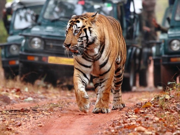 Golden Triangle With Jangle Safari (Ranthambore). Private tour
