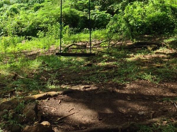 Antigua Rainforest Hiking Tour