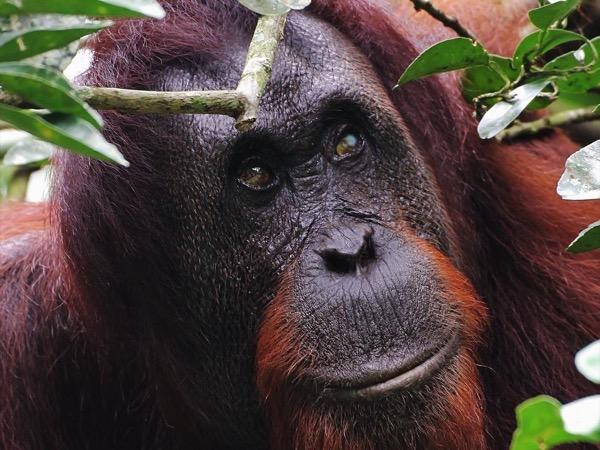 Borneo Wildlife Upclose - Private Tour