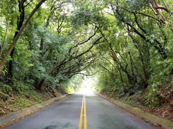 Southeast & Windward O'ahu with Hawaii's Top Rated Private Tour Guide