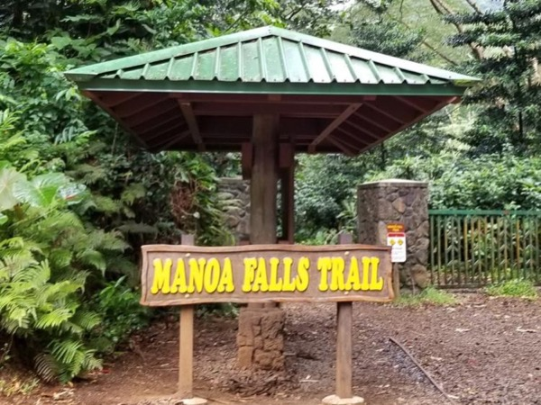 Manoa Falls Trail with O'ahu's Top Rated Private Tour Guide