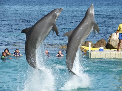 Dolphin Cove and Ocho Rios Highlight Private Tour
