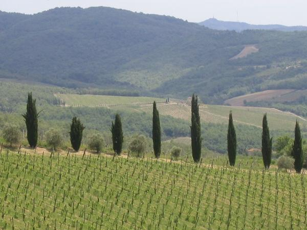The Chianti tour - From Florence