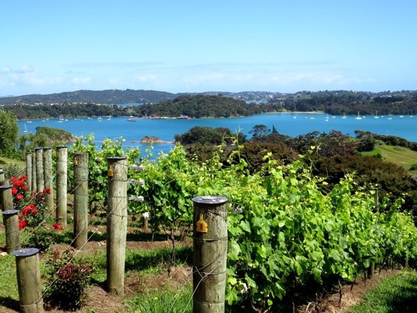 VIP Waiheke Island Paradise Private tour