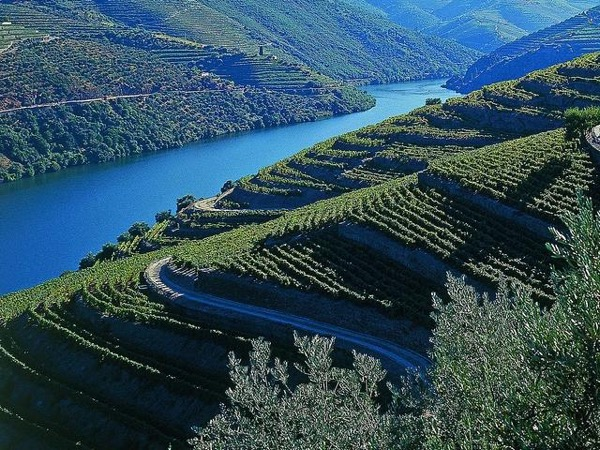 Douro Valley (UNESCO) Wine Experience - Private Tour