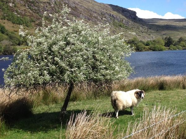 Private Motor Tour of Kerry, Cork and Clare in Ireland's South West
