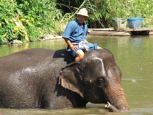 Thai Elephant Conservation Center, elephant hospital, Wat Phrathat Lampang Luang