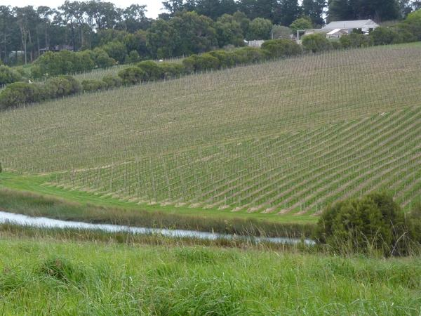Private Tour - Mornington Peninsula - The Coast, The Hinterland, The Wineries
