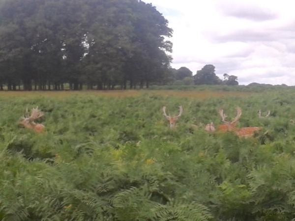 London Royal Deer Park Bike Tour