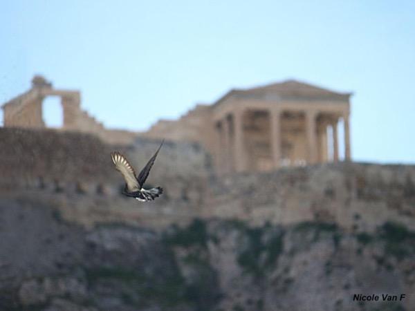 Athens Nature Walk