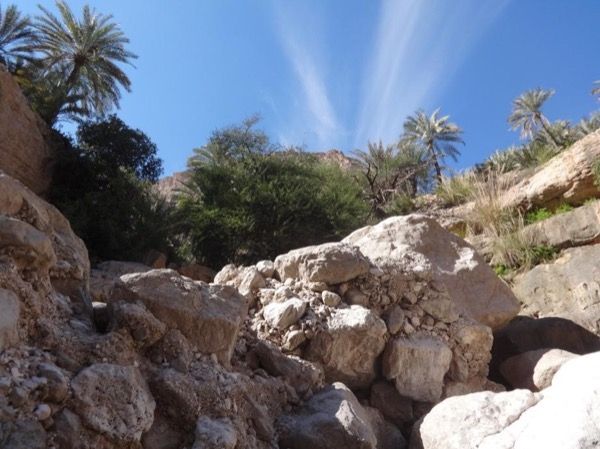 Coastal Tour and Wadi Shab