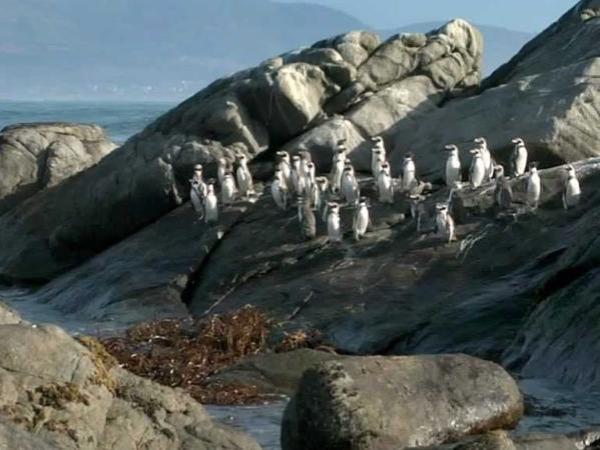 Penguins Island Cachagua & Zapallar