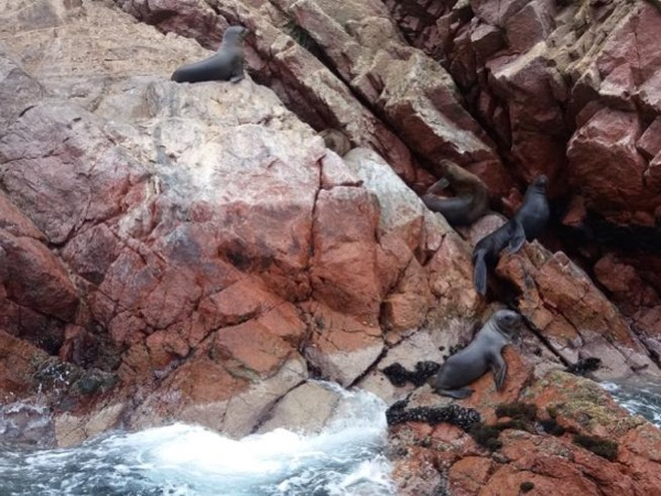 Paracas & Ballestas islands (Full Day)