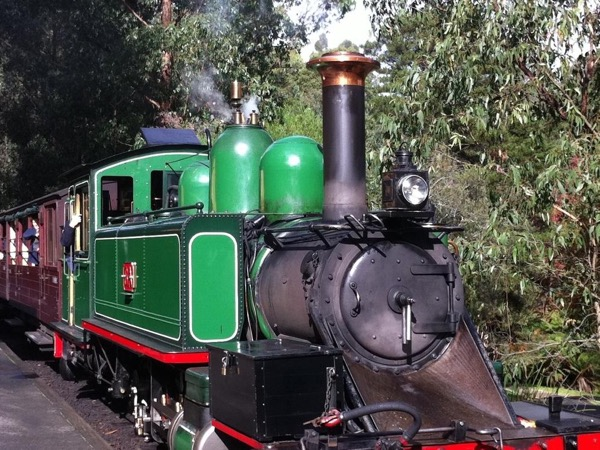 Puffing Billy & Dandenong Mountain Tour (Kangaroos in the Wild) Private tour