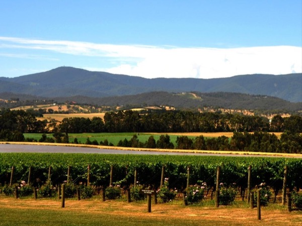 The Best Yarra Valley Winery Private Tour