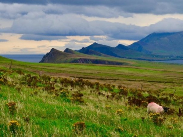 The Wild Atlantic Way - 3 Day Tour from Cork to Killarney, Dingle & Galway/Limerick
