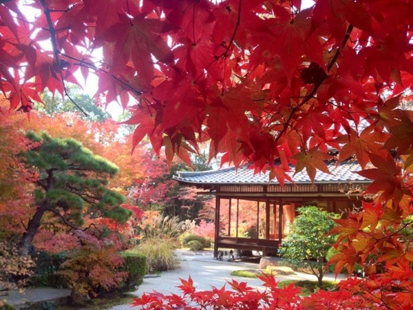 Autumn leaves in Kyoto - Private Tour