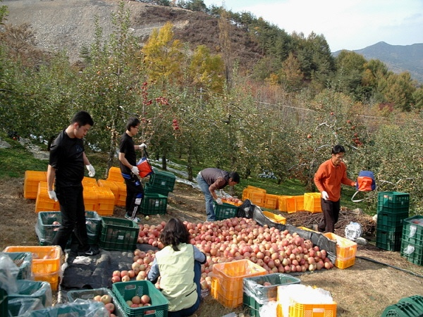 Korea Fruits Farms tour (Miryang + Gimhae + Jinyeong )