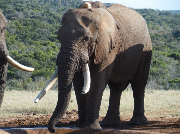 Addo Elephant National Park Group Package
