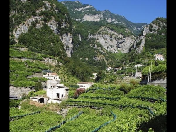 The Amalfi Lemon Tour