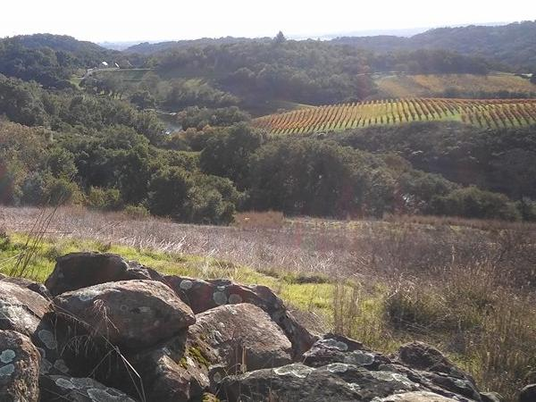 Dry Creek / Sonoma / Napa 8 hour tours up to 5 people