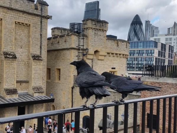 Tower of London and Hampton Court palace tour