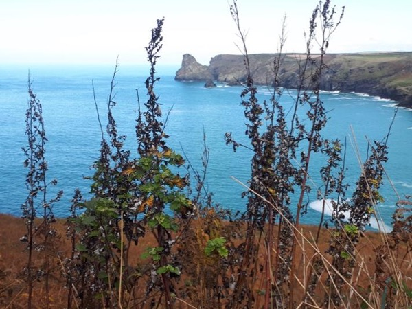 Private Guided Tour of Poldark's Cornwall