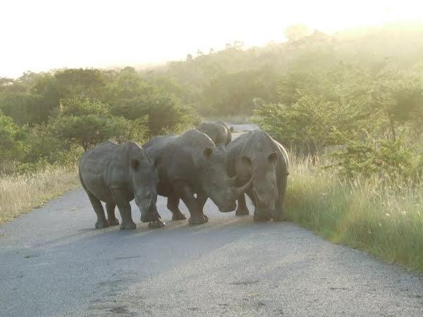 Private Big 5 Safari Tour to the Hluhluwe Imfolozi Game Reserve