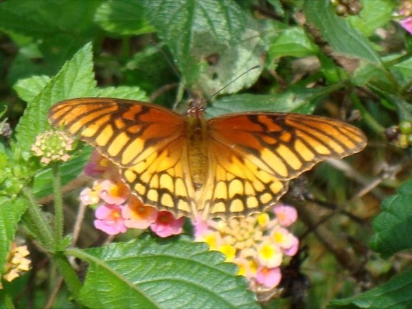 Butterfly Tour and Route of Flowers Towns