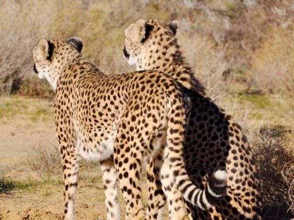 Private Day Safari