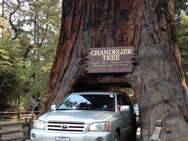 Giant Redwood Trees Tour - 2 Day Private Tour