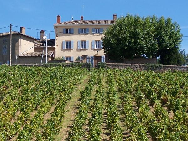 Beaujolais, Full Day Wine Tour