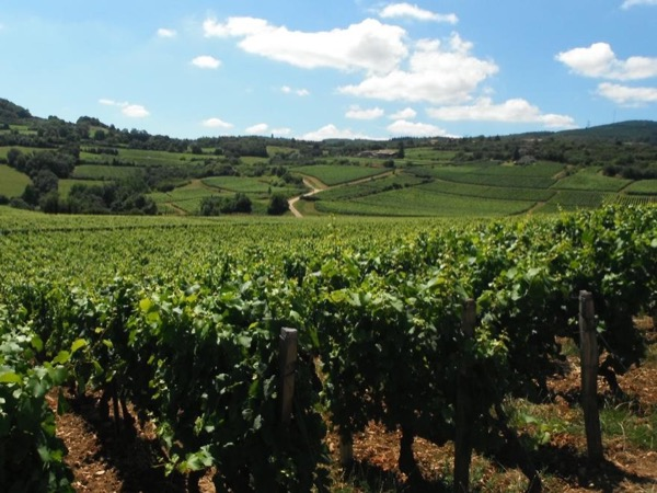 Wine tour in South Burgundy