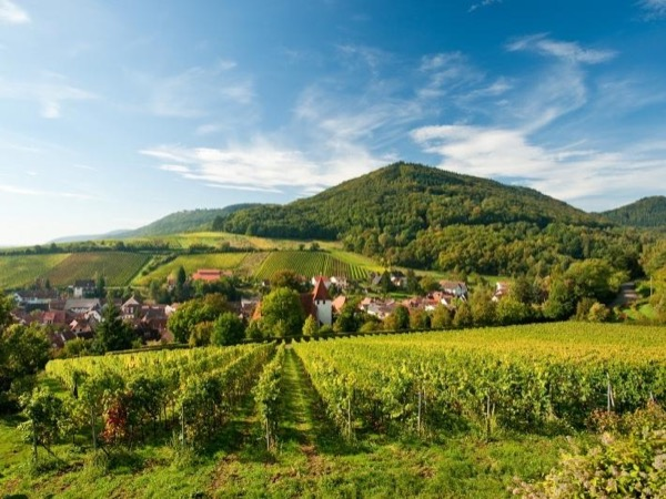 Experience the wonders of Alsace in Style.