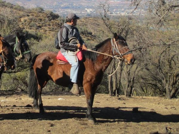 Horseback riding the Andes Mountains